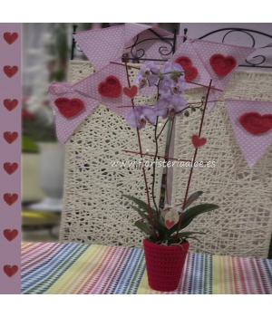 Orquidea Phaleanopsis Amor